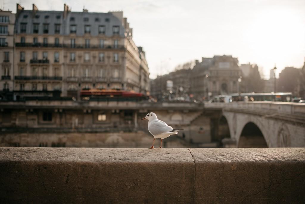 París_0044